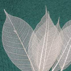 Skeleton leaves - 20